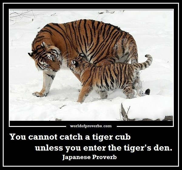 Tiger Cubs Quotes
