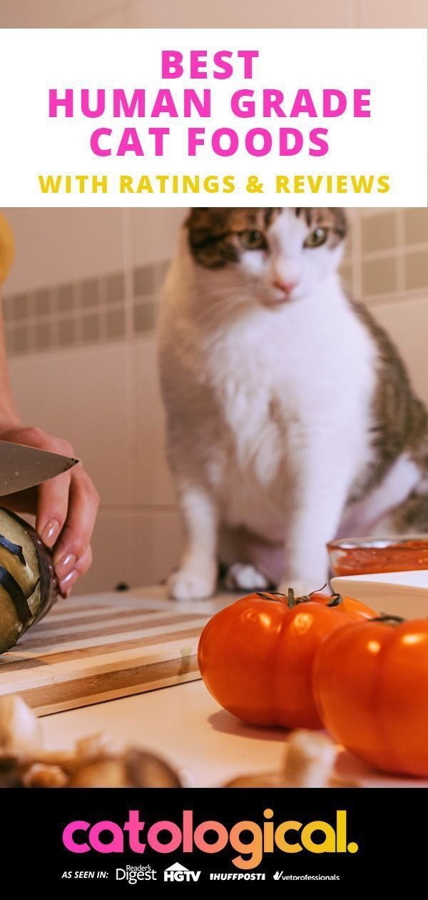 Want To Make Sure Your Cat Is Only Getting The Very Best
