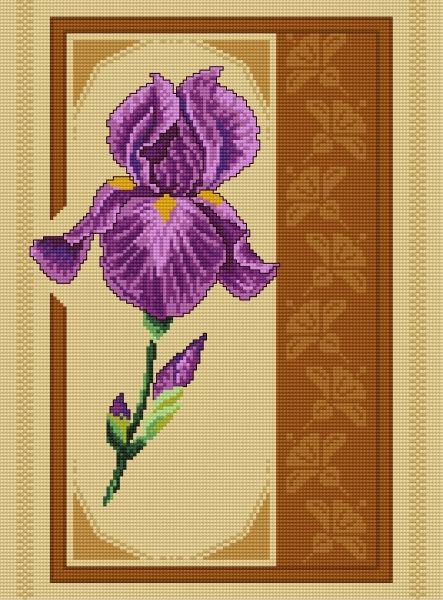 Irys (roślina, kwiat)
