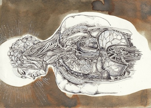 "Artist:  Rebecca Hiscocks  ""Anatomy""  Fine Liner Pen and Quink  2011"