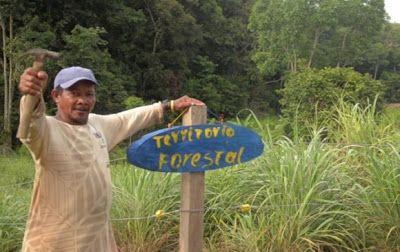 Solución Solar & Led : Con árboles, los campesinos se pensionarán Las ras...