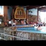 Aquapark Žusterna – kupanje i rekreacija 365 dana u godini http://www.personalmag.rs/blog/aquapark-zusterna-kupanje-i-plivanje-365-dana-u-godini/