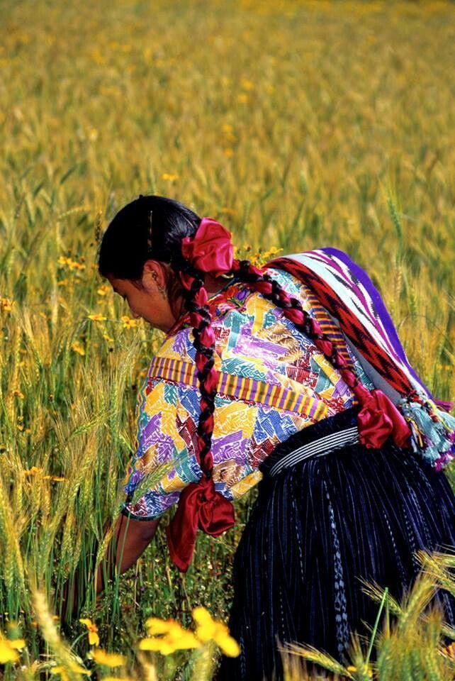 Wheat harvest in Quetzaltenango
