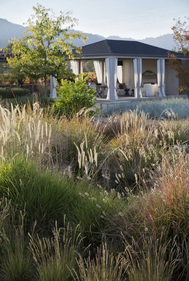 """Ornamental grasses are soft, move in the wind, don't use as much water as flowering plants, and have a country agrarian feel,"" says Lewis. Scott Lewis vineyard retreat. Northern California. Photo: Matthew Millman"