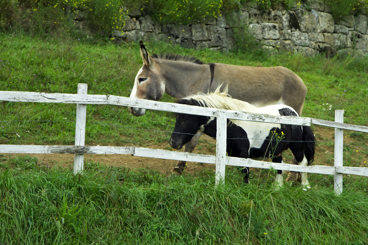 Cute little donkeys