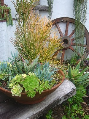 Love the succulents with that wagon wheel in the back