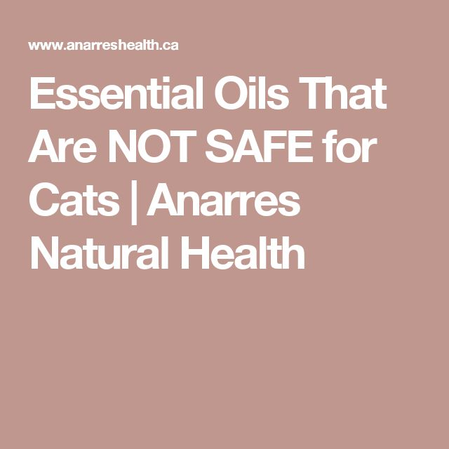 Essential Oils That Are NOT SAFE for Cats | Anarres Natural Health