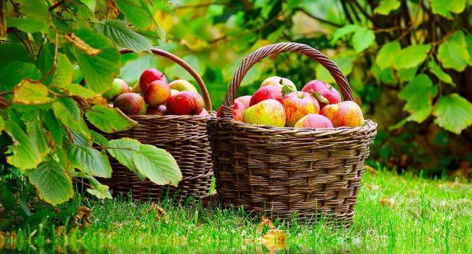 10 непознати рецепти с ябълки при болести и за здраве http://www.zdravnitza.com/a/nav/news/s/s/news_id/7144