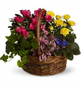 Blooming Garden Basket from Villere's Florist. We Deliver Plants 7 Days a Week to Metro New Orleans! http://www.villeresflorist.com/metairie-florist/plants-509c.asp?topnav=TopNav #Plants #BloomingPlants #NewOrleans