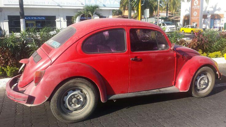 Mexican bug