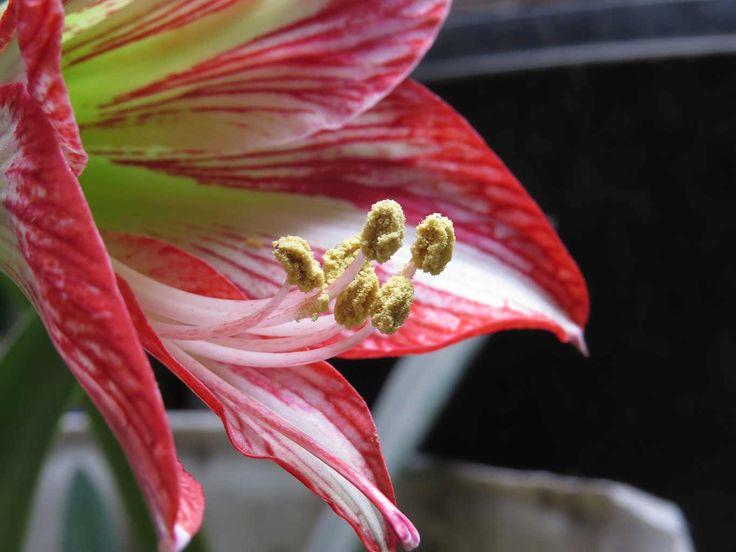 fotografía flor