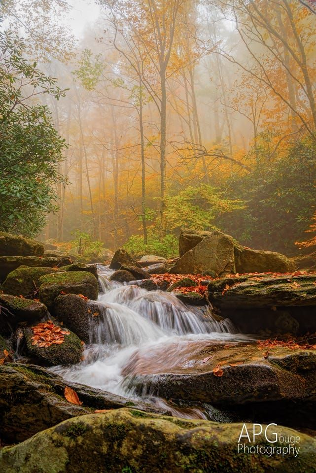 The weather this time of year in the Blue Ridge Mountains can change so quickly,  One moment clear blue skies. Foggy and rainy the next.  The fog, though, mutes the sounds, but enhances the colors, as it did on this day.