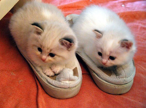 fuzzy slippers? see more at http://blog.blackboxs.ru/category/funny-cats/