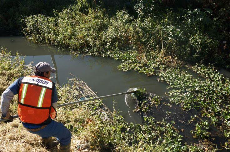 Los trabajos de limpieza profunda en los drenes que realiza el Ayuntamiento de Morelia a través de diversas dependencias, presentan un avance del 55 por ciento en los 13.5 kilómetros ...