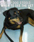 Causes of Blood in Dog Stool