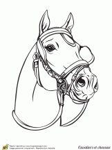 cavaliers et chevaux gros plan