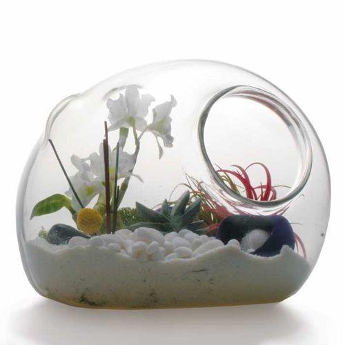 Terrarium, garden art in glass: Google Image, Glasses Container, Hands Blown Glasses, Glasses Terrarium, Crafts Ideas, Handblown Glasses, Image Results, Gardens Art, Business Ideas