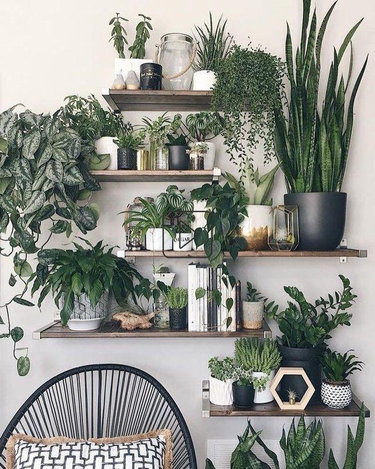Pflanzen auf einem Regal statt Schnickschnack scheinen ungefähr richtig.