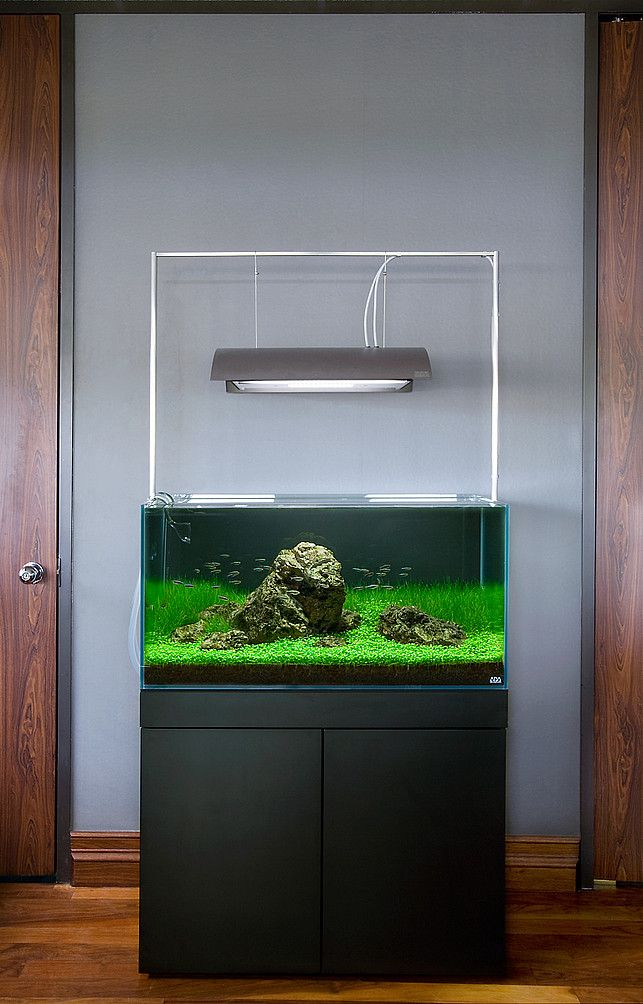 die besten 25 aquarium design ideen auf pinterest. Black Bedroom Furniture Sets. Home Design Ideas