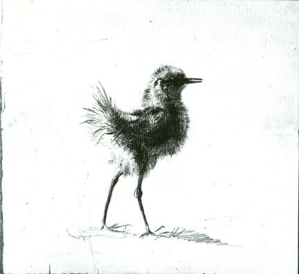 "No. 523, Downy Chick, c. 1870-1875, Olana Collection Spring has sprung!  Here is a sketch Frederic Church made of a downy chick from the barn.  The sweet nature of the bird is how he came up with a nickname for his daughter Isabel, who he referred to as ""Downie"". The barn is now the Wagon House Education Center where we hold many of our educational programs for families!  Check out the Education page on www.olana.org to find out about our upcoming events.  #familyMW   #museumweek"