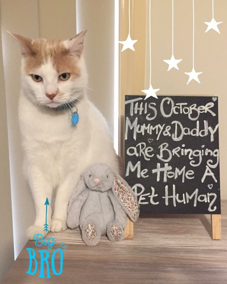 Pregnancy Baby Announcement with pet cat