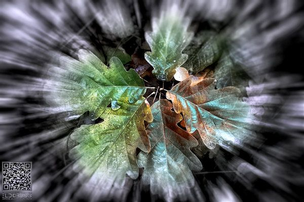Autumn Star [ΞLD©RAD® Theme ART]  #eldoradothemeart #photography #autumn #crazy #Star #leaves
