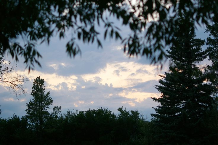 Peering through the trees into the lovely dusk sky