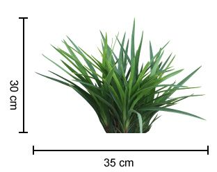 ARANDA™ Dianella is a very compact plant with deep blue flowers | Foliage First Range