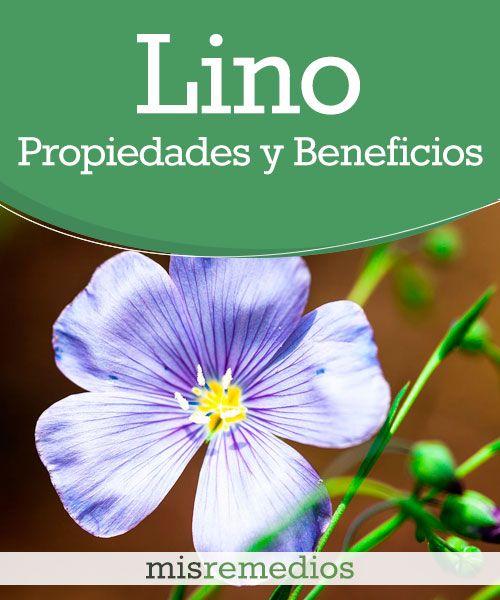 #Lino - Propiedades y Beneficios #PlantasMedicinales