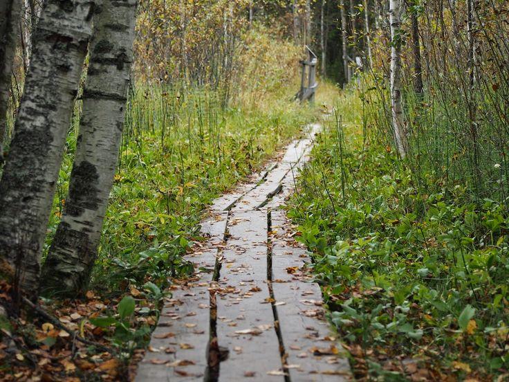 Syksy ja pitkospuut Kohti Joulua -joulublogi http://www.kohtijoulua.fi/