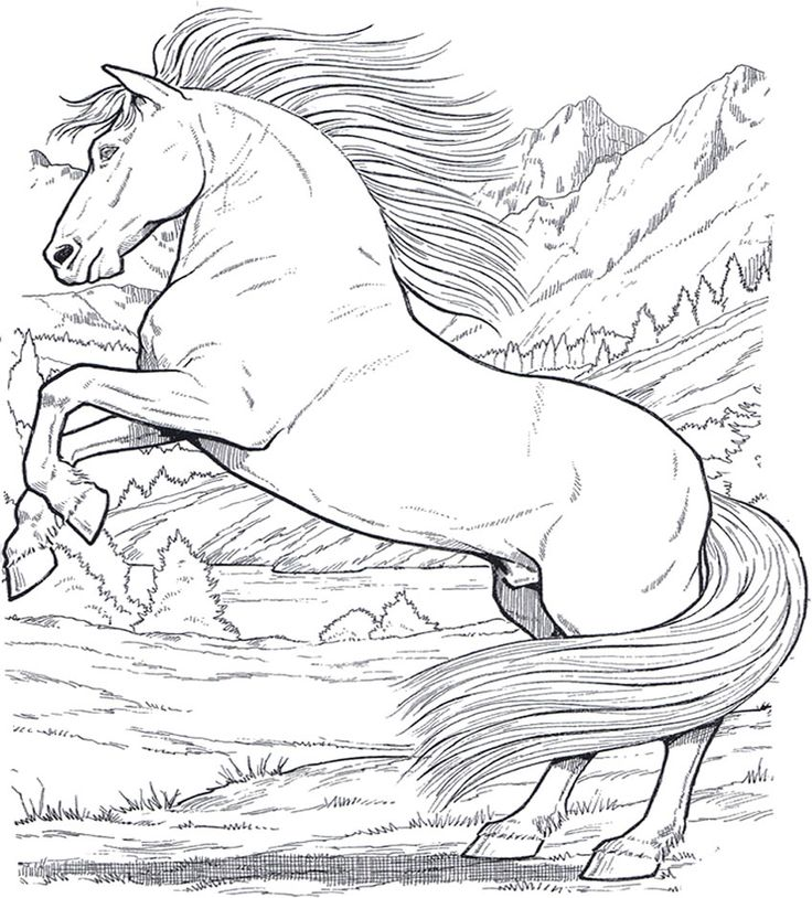 cavallo_6 disegni da colorare per adulti