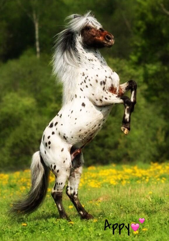 I have been informed by a commentor that this stallion is actually an Falabella.