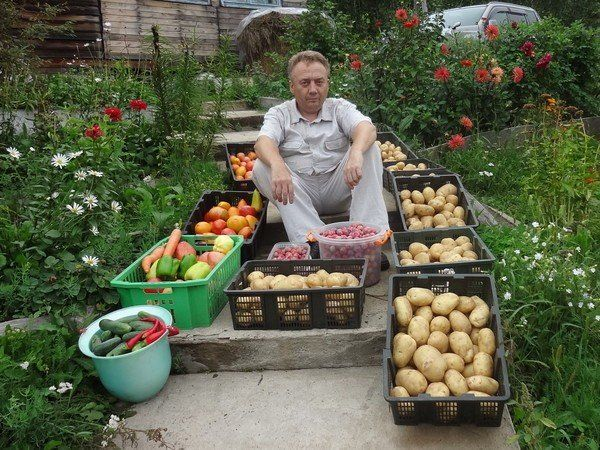 Игорь Лядов использует 4 вида подкормок. Вот они: