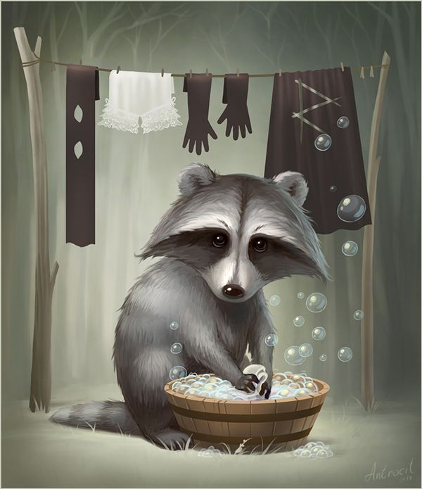 Raccoon on Wacom Gallery