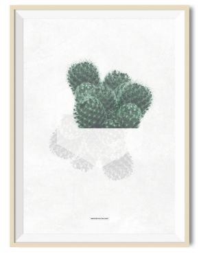 Cactus 01 - A3 poster - Another Poster Shop