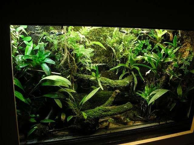 Best 25 Frog Terrarium Ideas On Pinterest Vivarium
