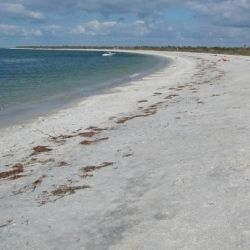 The campsites and rustic cabins at Cayo Costa Island State Park are literally steps away from this incredible crescent-shaped Gulf beach.: Florida Beach, Adventure, Campsite