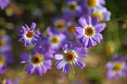 TWA-0053624 © WestPix Wildflowers in bloom at Kings Park today. Picture: Megan…