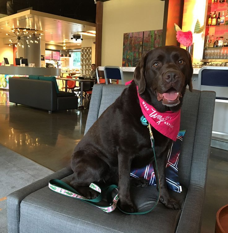 Dog Friendly Raleigh Is Full Of Art And Design Dog Friends Dogs