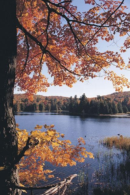 Gatineau Park - Parc de la Gatineau by Canada's Capital - Capitale du Canada, via Flickr
