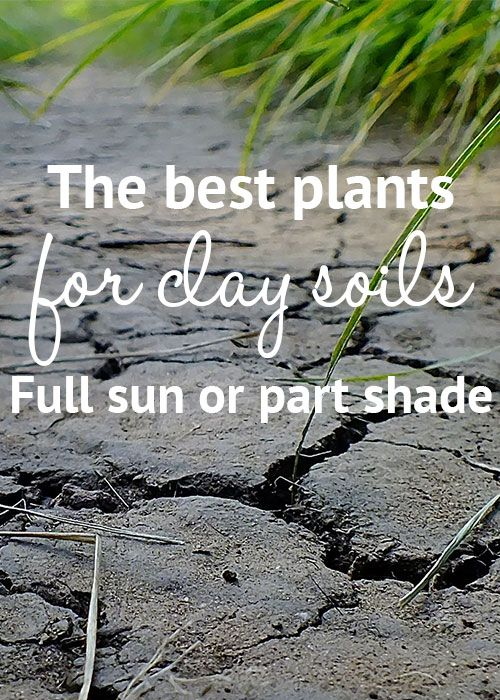The best plants for clay soil in full sun or partial shade - great list!