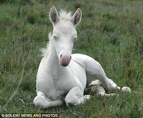 This white foal has been drawing crowds to a national park in Hampshire