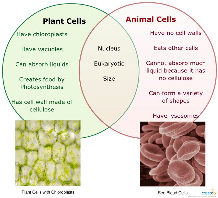 45 Best Cells Images On Pinterest Life Science Physical Science
