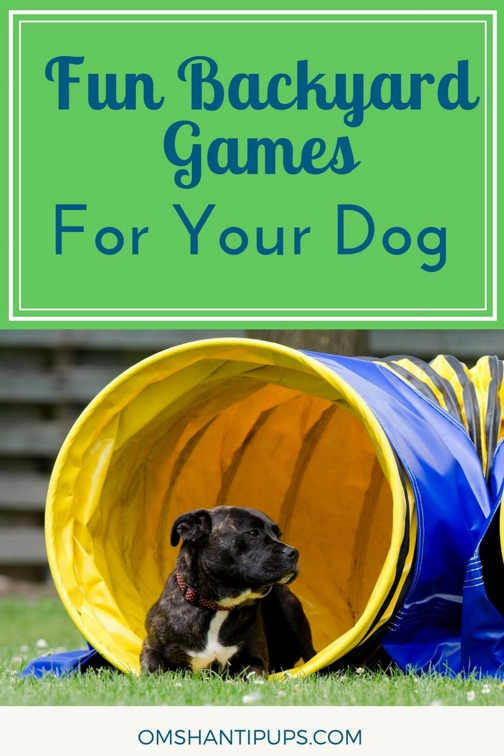 Pin By Dog Of Fan On Dogs Dog Activities Outdoor Dog Toys Dog