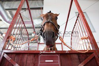 Horse head in manege box