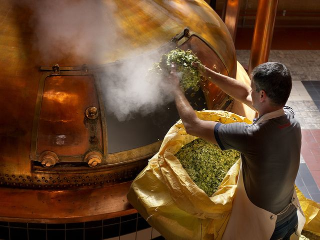 Adding the Hops at Brewery Westmalle (by Visit Flanders)