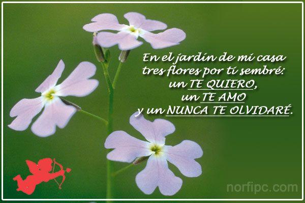 En el jardín de mi casa tres flores por ti sembré: un TE QUIERO, un TE AMO y un NUNCA TE OLVIDARÉ.