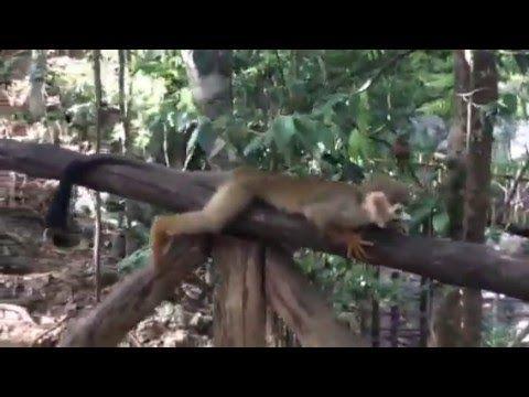 """""""Monkey Jungle"""" bei Sosua - Dominikanische Republik"""