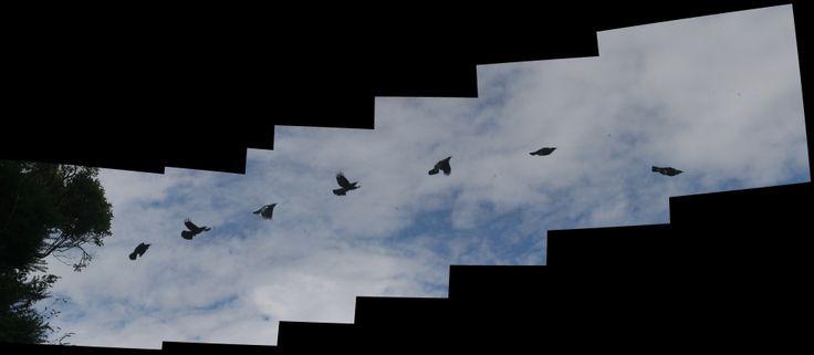 Tui_flight_01.jpg 7,832×3,421 pixels