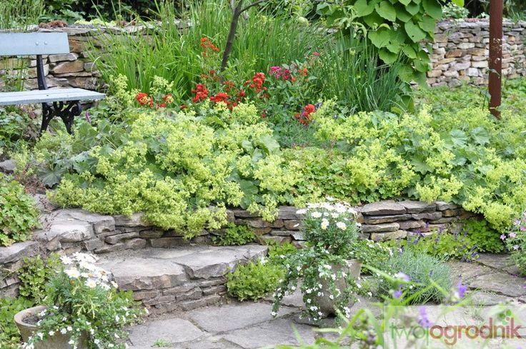 Uroczy kącik w stylu angielskim, najpiękniej wygląda w czerwcu-lipcu, gdy kwitną bodziszki i przywrotnik miękki